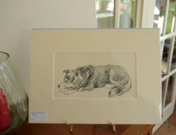 Large Collie - Col D7 -  lying down  1930's print by Lucy Dawson